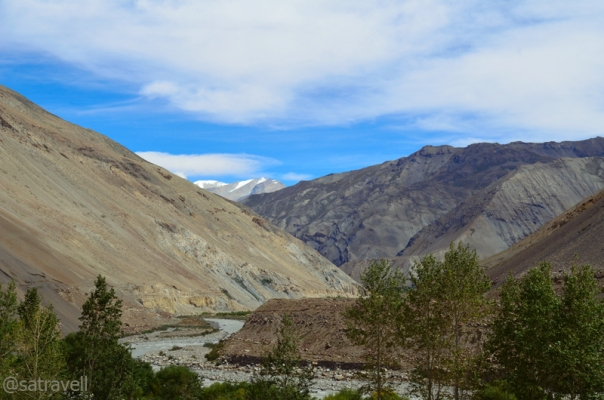 Poplars in a wider section of the Sham region of Spiti