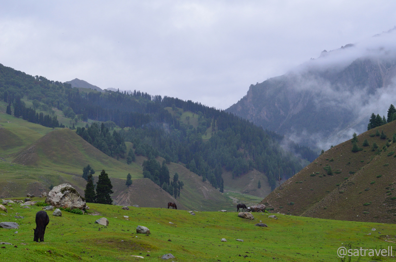 Greenscape near Sonamarg