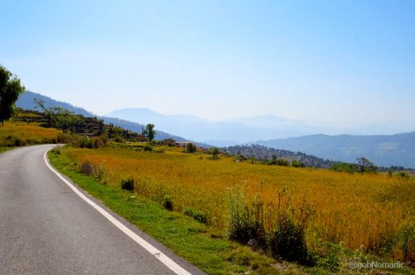 Golden wheat along the motorway near the tea estates of Berinag; view towards the hills of Pithoragarh