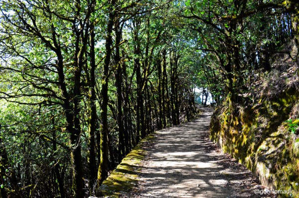 Binsar is a hiker's paradise. Pathways are accessible for most part of the year. One may not find habitation for hours at end, therefore, it is advisable to carry supplies along