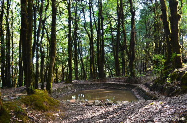 A large quantity of watering holes, called Naulas, are found in this water retaining Oak forest