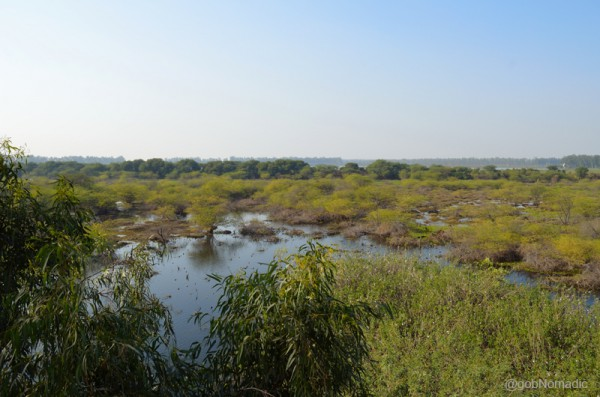 A panoramic view of the Bhindawas Wetlands. Taken from the watchtower, the photo depicts about one-fifth of the sanctuary