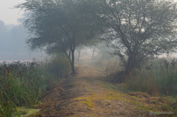 A misty winter morning at the Sultanpur National Park