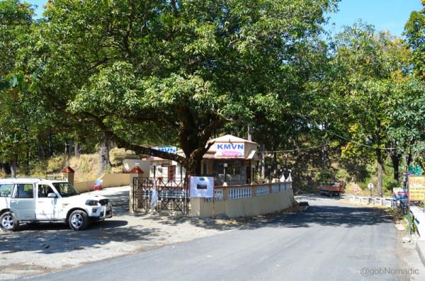 The mango tree at Ghatgarh, a birdlife paradise, where Corbett used to take a smoke break on his way to Nainital
