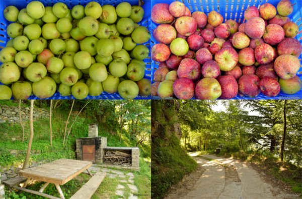 Clockwise from top: Harvested Golden, Red Apples, pathway inside the premises, wood-fired oven