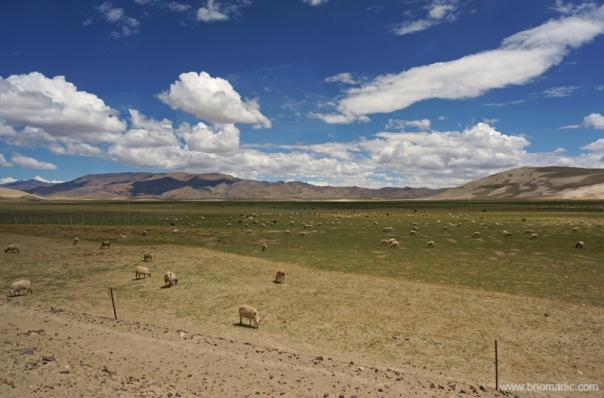 Greener Pastures!; near Saga