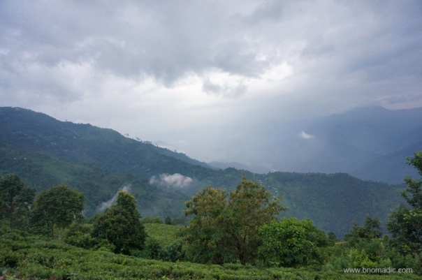 The Tea Estates of Darjeeling