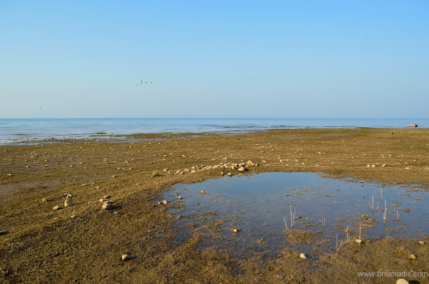 The emerging wetlands gathered international eyeballs after it was declared a Ramsar Site in 2002.