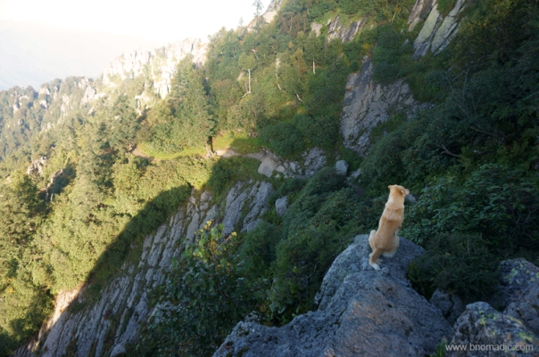 The trail downwards; this dog accompanied us throughout the trek